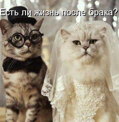 С юмором о свадьбе
