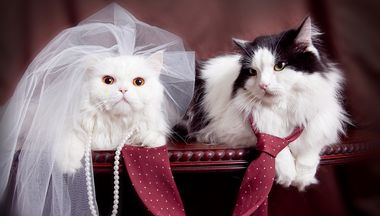 Сначала свадьба, потом - поцелуи